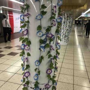 新宿駅に朝顔が!