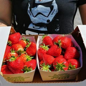 【Fête des fraises à Carros】カホスのイチゴ祭りと自家製ヤギチーズ