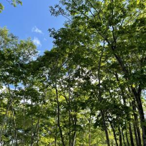 【過去記録】白老ブウベツの森キャンプ場
