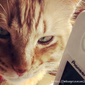 電話番をするネコ