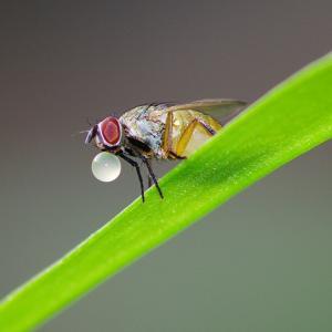 虫の水玉(?)作り