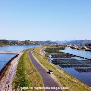 収穫最盛期、清流「四万十川」の青のり(アオサノリ)