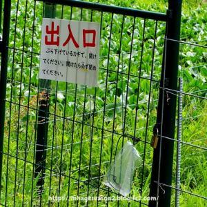 イノシシ柵が張り巡らされたトンボ公園では