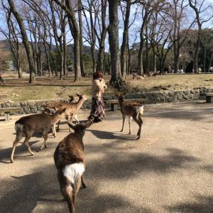 奈良公園の思い出♪