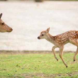 小鹿がカワイイ♪