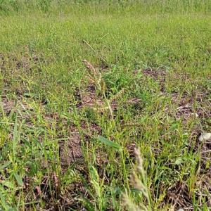 休耕田の除草~高刈り