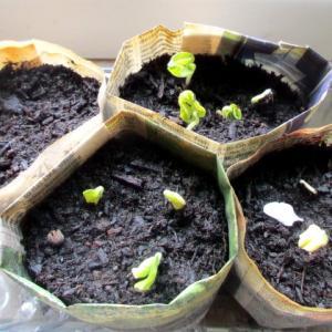 植物成長記録
