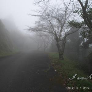 毎日です・・・霧の中!