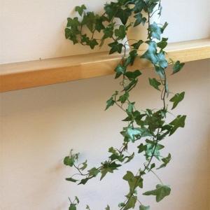 観葉植物が枯れてしまった話。