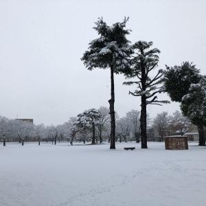 初雪だぁ~