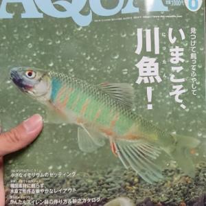 アクアライフ川魚特集