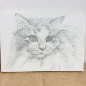 ノルウェージャン美少女猫、描き始めました(その1)