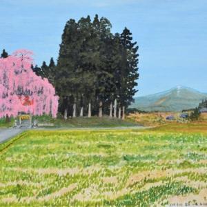 鎮守の杜の名桜今年もみごと   仙台市泉区小角
