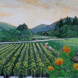 紅花畑の夜明け  山形市高瀬