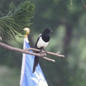 年末年始台湾旅行記 おまけ 台湾の野鳥