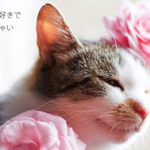 ブスはピンクがお好き?   ピンク基調のニットワンピで韓国風美人