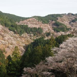 サクラ!サクラ!サクラ!京都・奈良ひとり旅① ~ちょっと早かった、吉野山~