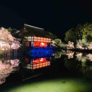 サクラ!サクラ!サクラ!京都・奈良ひとり旅② ~平安神宮のライトアップとアートなお宿~