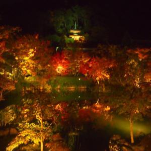 11月の京都ひとり旅① ~永観堂の紅葉ライトアップとゲストハウス~