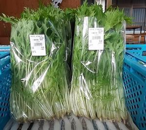ほうれん草、春菊、水菜、小松菜