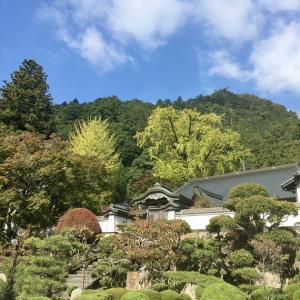 大窪寺の大銀杏