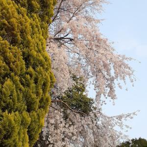 重要文化財 細川家住宅の花々