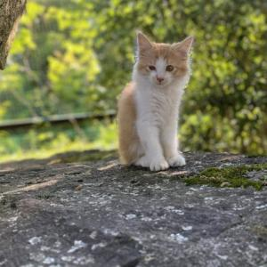 遍路猫『だるま』