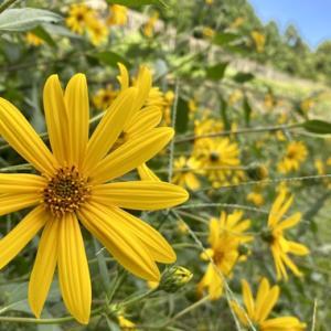 黄色のもう一つの秋