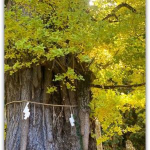 多和から行って来ました 〜岩部八幡神社〜