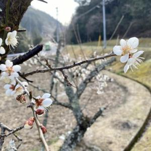 スギ花粉飛ぶとぶ多和の春嵐