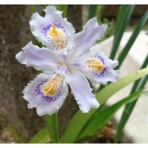 お庭に咲く花々