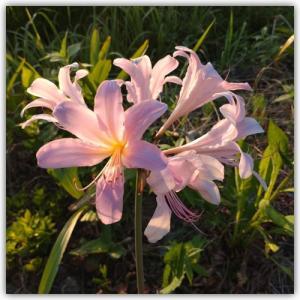 Sさん通信 〜多和に咲く花々〜