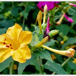 多和に咲く花々 〜Sさん通信〜