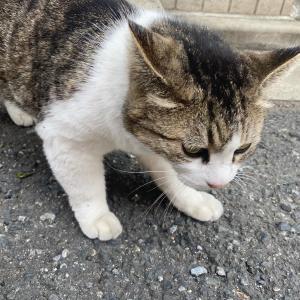 近所の飼い猫!最近は、夜に出会う!。