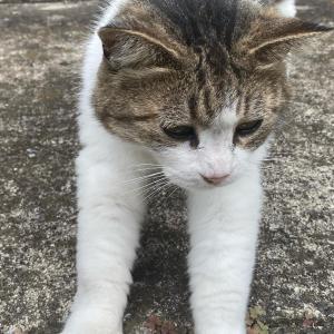 最近は、撮影もしてないから、猫ばかり!?