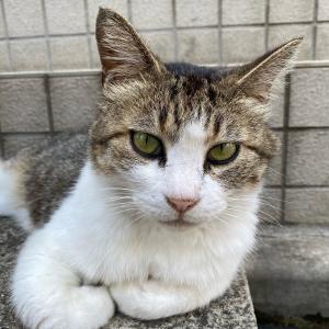 今日の猫は、凛々しくとれいるでしょ??
