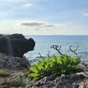 神の島『久高島』に導かれて