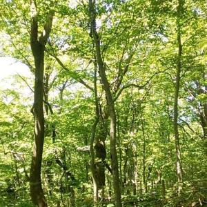 緑がまぶしい留山♪