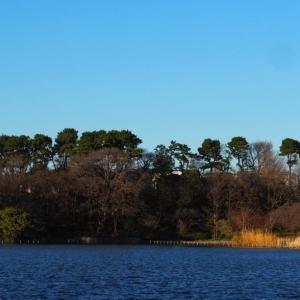 【大田区】野鳥に会いに洗足池公園へ