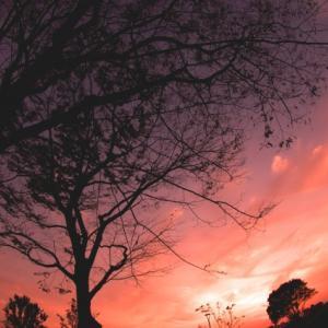 ‐『日朝関係の視角』のまとめ その3(『関東大震災の朝鮮人虐殺/朴烈大逆事件』シリーズ)‐
