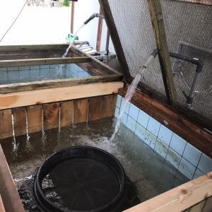上流で友釣り可能・『生け簀に水・囮』準備完了!