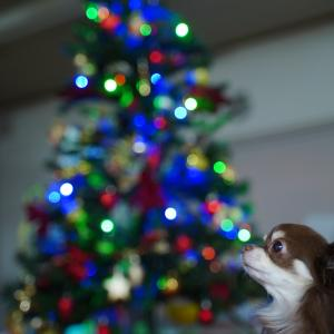 クリスマスツリー(*≧∀≦*)