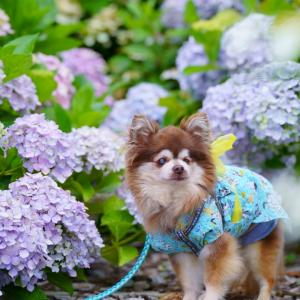 紫陽花(◕ᴗ◕✿)