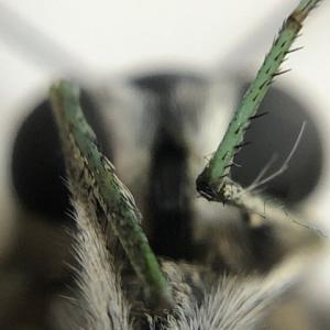 アゲハ飼育日誌1960 雄雌の見分け方 蝶が死ぬ時 小春日和