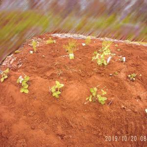 種をまいたり苗を植えたり。
