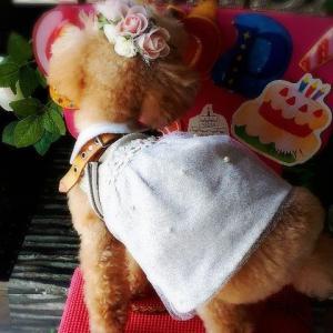 マハロ11歳のお誕生日