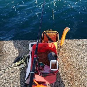 11月は不調。 築港堤防