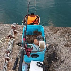 小さいけど今日は2つ。 築港堤防