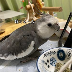 *1539 放鳥のお供