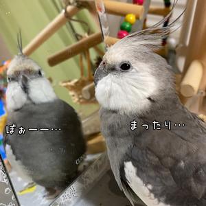 *1549 バランス感覚抜群☆